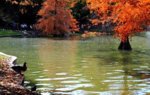 naturaleza_paisajismo 1