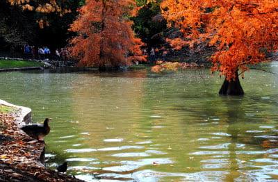 ¿Por qué nos hace tan bien rodearnos de naturaleza?