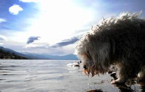 perro paisajista