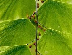 Foto plantas (7)