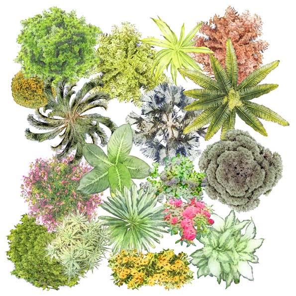 Arboles en planta png para photoshop imagui for Plantas paisajismo