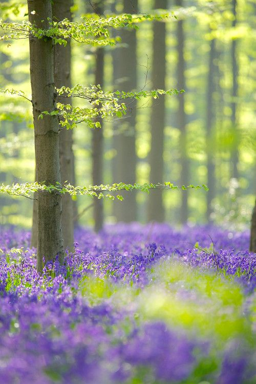 Jardines que evocan sensaciones