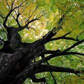 El árbol de la palabra