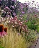 Los olores agridulces de la primavera…