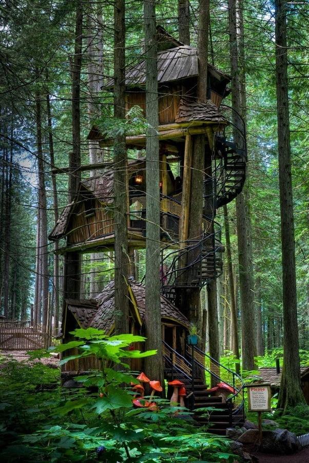 casa en el arbol 2 (1)